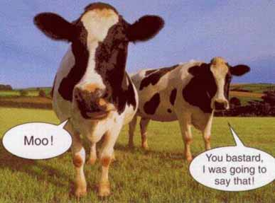 funny-cow